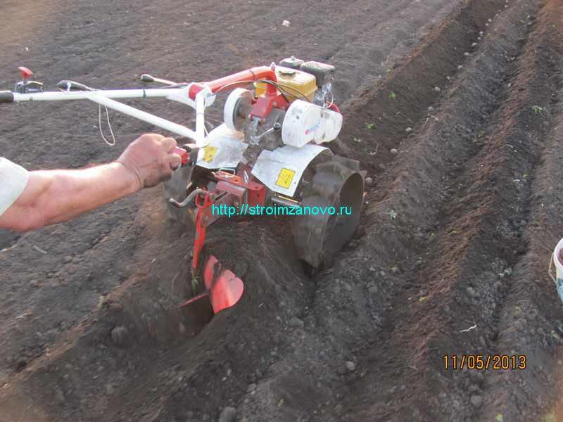 Этот способ посадки картофеля