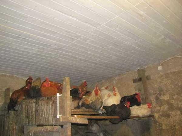 утепление потолка в курятнике