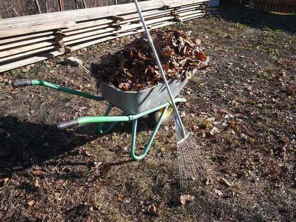осенние работы в саду