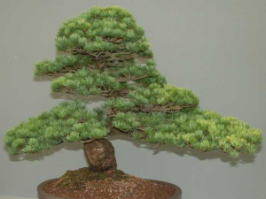 bonsai_2